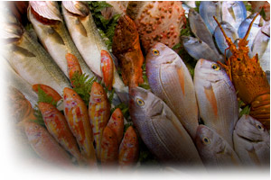 Fish & Shellfish Industry